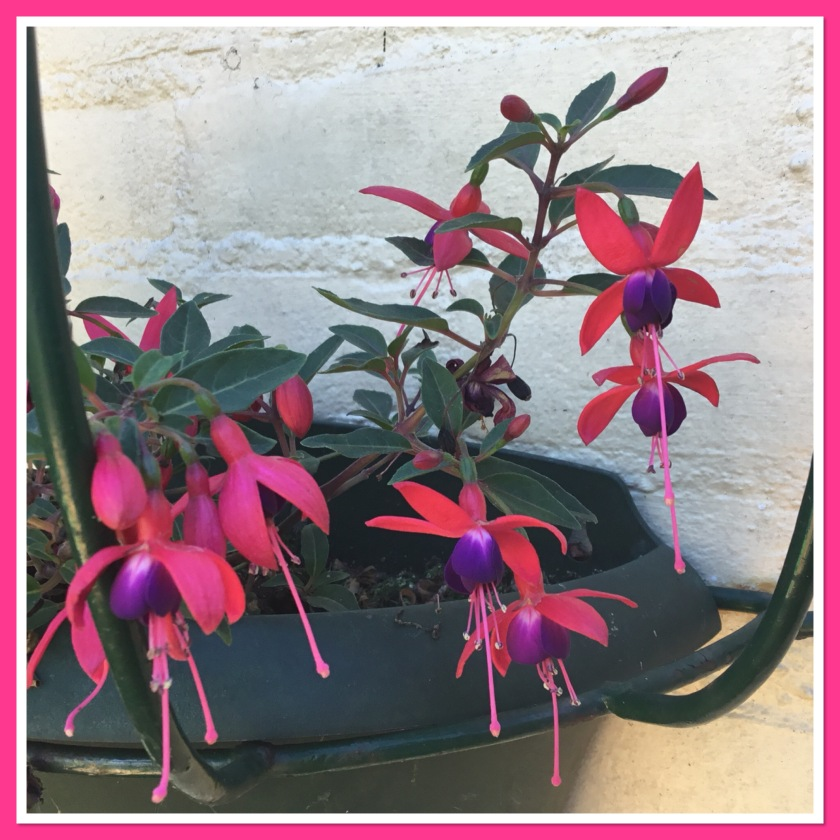 Nail inspiration pic. Bright pink and purple fuchsia plant hanging on our wall