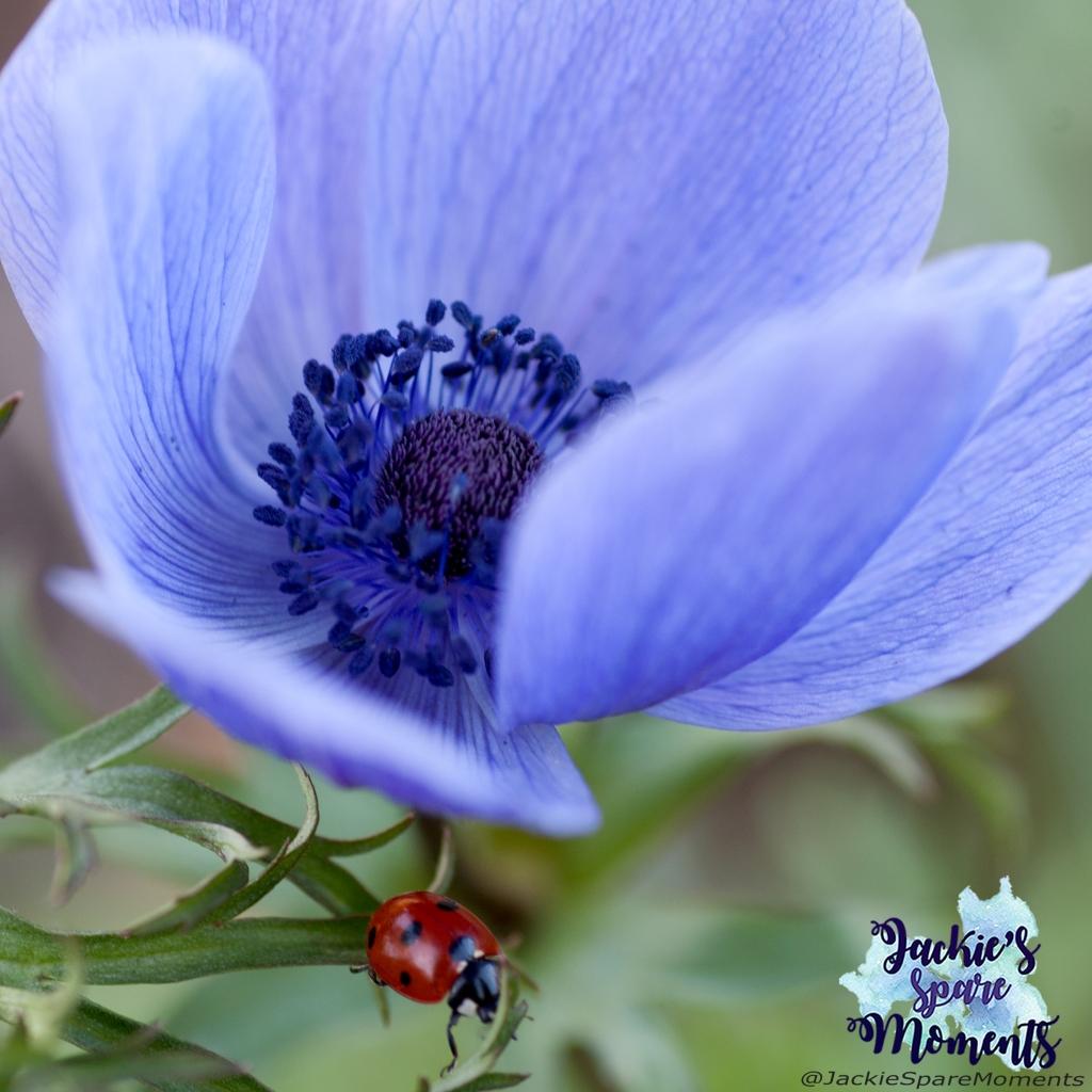 Anemone with ladybug